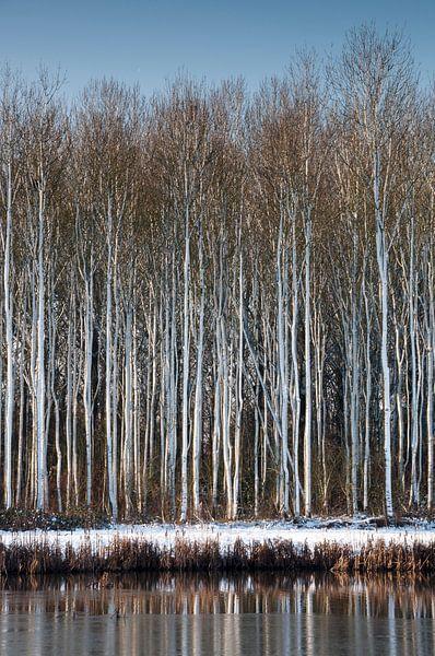 Besneeuwde bomen aan het water