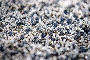Aangevroren mist aan het groene gras van Fotografiecor .nl