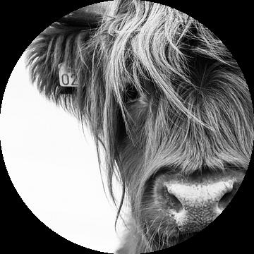 Portret Schotse Hooglander zwart-wit van Sandra van Kampen