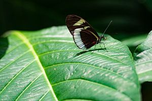 Close-up van vlinder