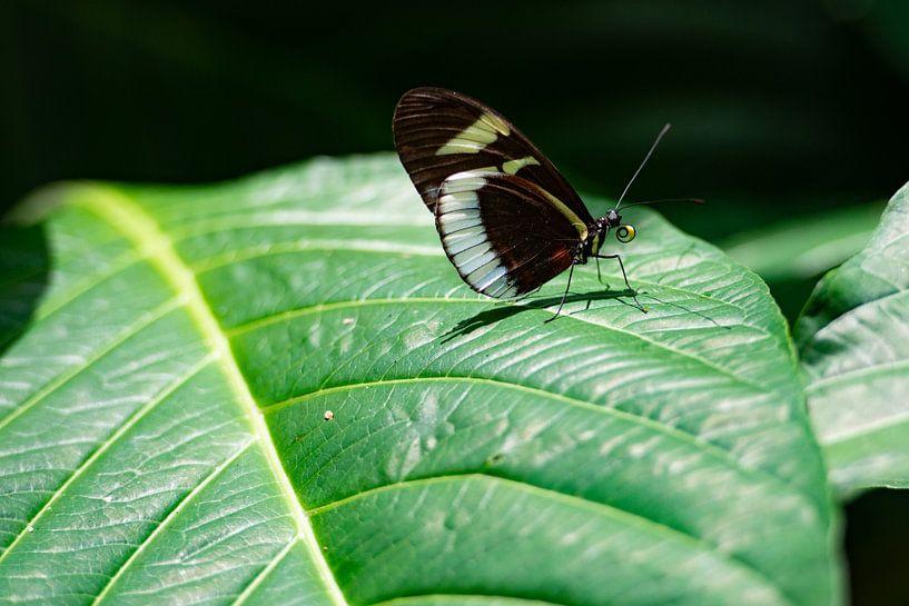 Close-up van vlinder van Ronne Vinkx
