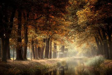 Repos éternel sur Kees van Dongen