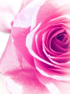 Halve roos von Elisabeth De Potter