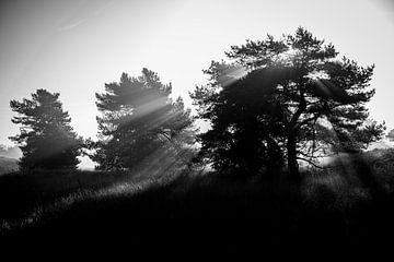 Veluwe noir et blanc sur Ellis Peeters