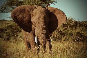 Olifant op de Serengetivlakte in Afrika van