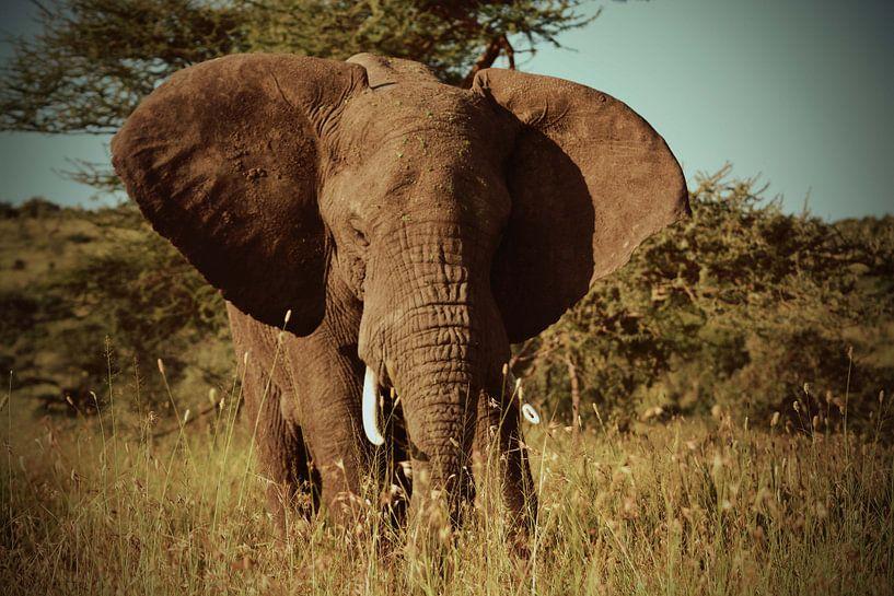 Olifant op de Serengetivlakte in Afrika van Jorien Melsen Loos
