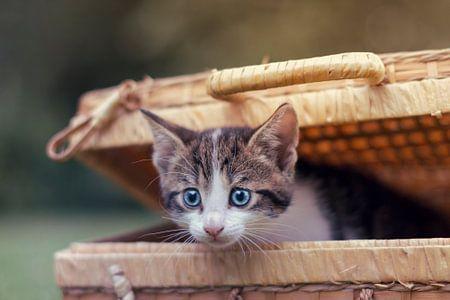 Peek-a-boo Kätzchen!