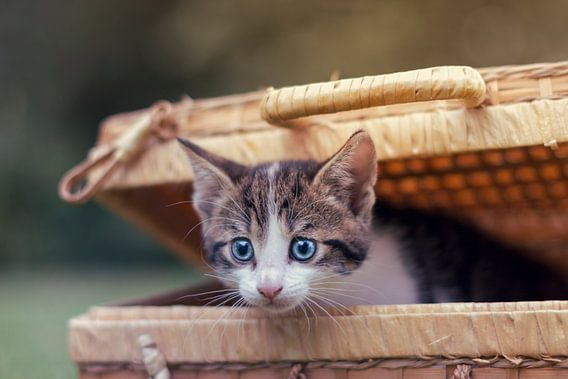 Peek-a-boo kitten! van Marloes van Antwerpen