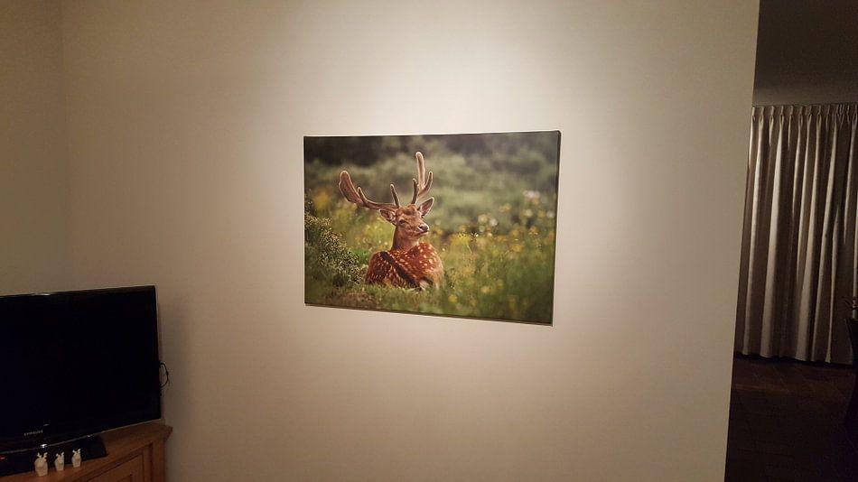 Klantfoto: Damhert van Mieke Korsten, op canvas