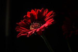 Bebloede bloem van