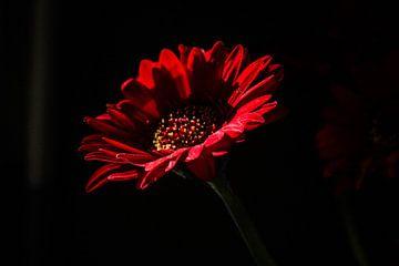 Bebloede bloem van Marit van de Klok