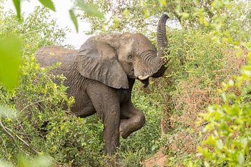 Tanzender Elefant von Marijke Arends-Meiring