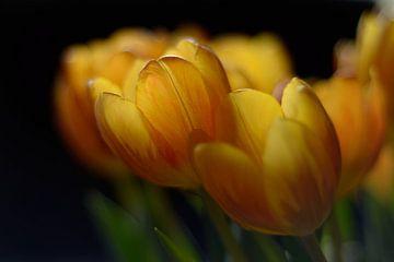 Tulpen op tafel van