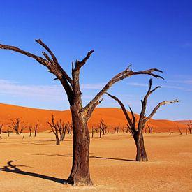 Province d'Afrique Aperçu