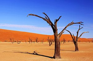 Dead Vlei Namibia von
