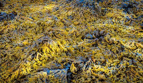 0366 Seaweed
