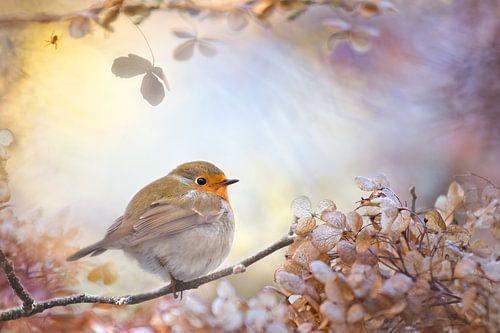Robin of dreams