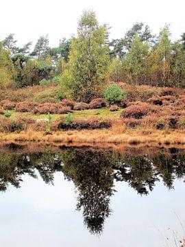 De boom weerkaatst op het water, te midden van prachtige herfsttinten. von Il se