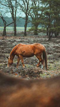 Ein schönes Porträt eines Wildpferdes von AciPhotography