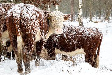 07-02-2021: News: Winterwetter: NiederlandeWinter in den Niederlanden. Rijssen und Umgebung. von Albert ten Hove