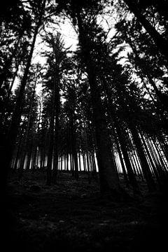 Bos op helling in de Ardennen von Jelte Bosma
