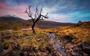 Schotland landschap dode boom van Peter Bolman