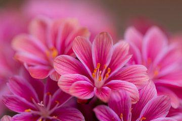 Soft in Pink van Marianne Henstra