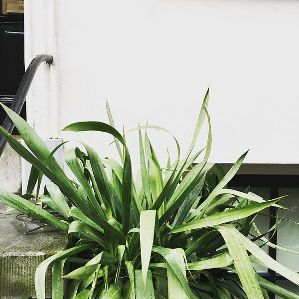 Plant on white wall van Keyhé Delsink