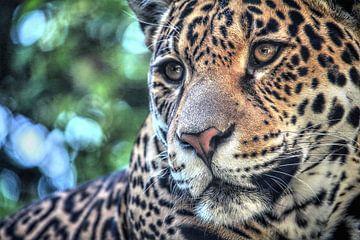 Jaguar portret  van Fotojeanique .