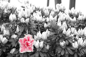 bloemen van marijke servaes
