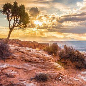 Majestueus uitzicht Canyonlands van Samantha Schoenmakers