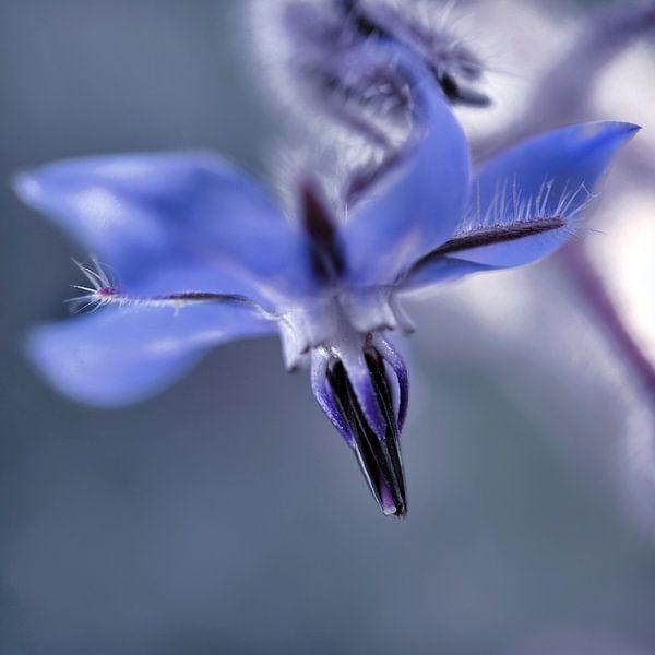 Fleur bleue van Martine Affre Eisenlohr
