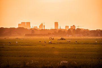 Boerenlandsschap in de polder met stad in de verte