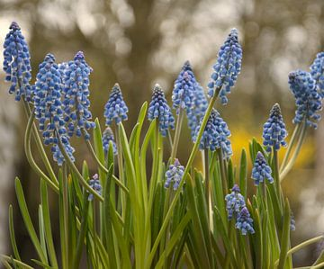 Een lente bosje bloemen voor jou van J..M de Jong-Jansen