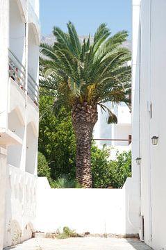 Palmtree van Ruud Ravensbergen