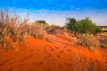 Zandduin in de Kalahari woestijn in het ochtendlicht, Namibië van Rietje Bulthuis