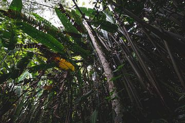 Tropisch bos in Quindío von Ronne Vinkx