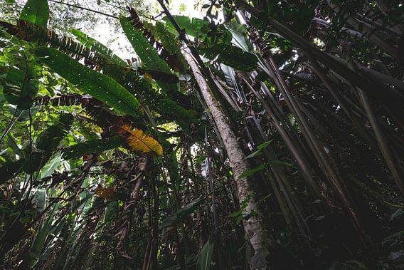 Tropisch bos in Quindío
