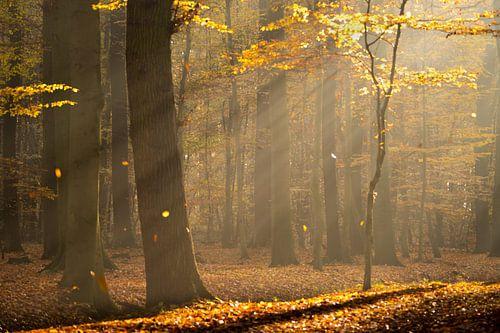 Streiflicht im Wald