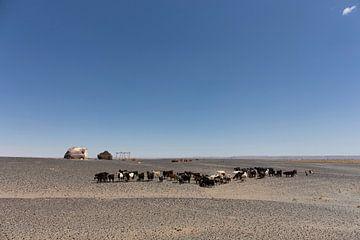 Kudde geiten van bedoeïenenmensen in de Marokkaanse woestijn, de Sahara van Tjeerd Kruse