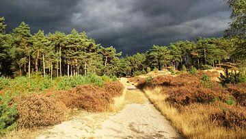 Donkere wolken boven bos van Rinke Velds