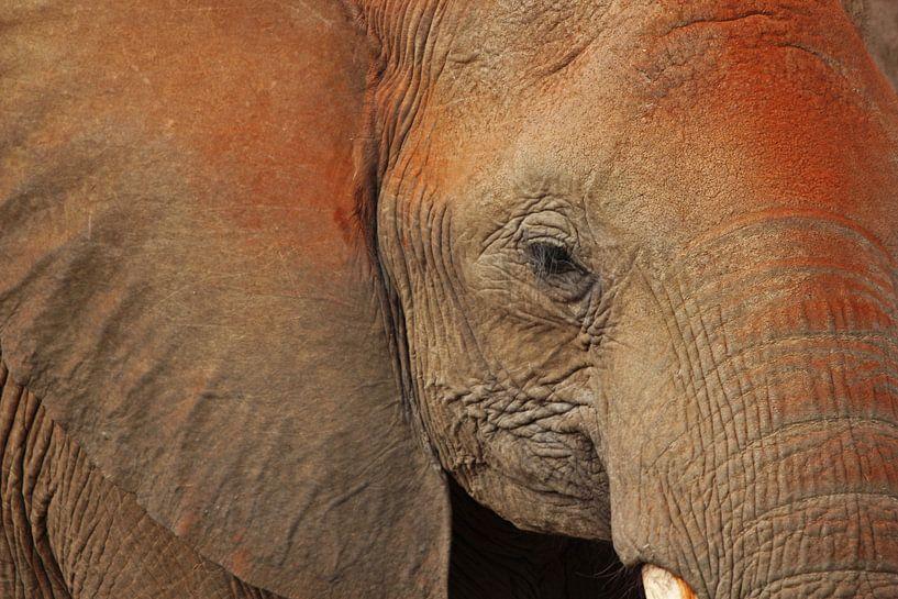 Elephant van Manuel Schulz