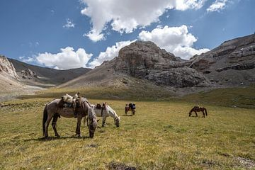 Paarden in het gras van Mickéle Godderis