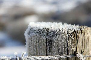Winterkristal...