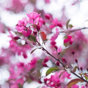 Bloesem in roze 3 van Wen van  Gampelaere