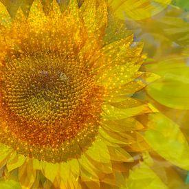 Sonnenblumen, Sonnenblume,  abstrakt,  (Helianthus annuus) von Torsten Krüger