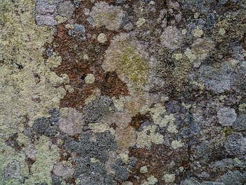Korstmossen op oude muur van