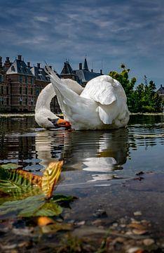 Schwan im Vijverhof in Den Haag von Chihong