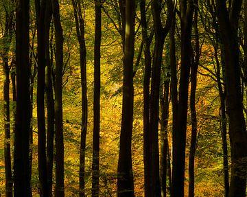 Autumn dance sur Nando Harmsen