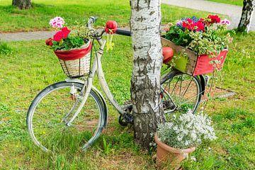 Ein mit Blumen dekoriertes Fahrrad lehnt an einem Baum. von Gunter Kirsch